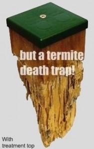 Termitim_2